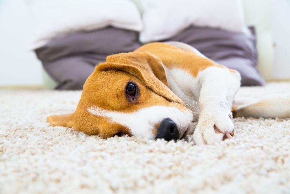 Carpets Woking